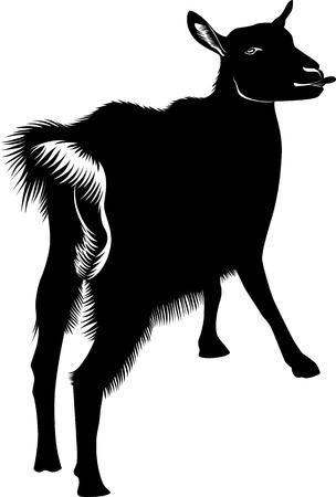 grazed: Goat kids animals