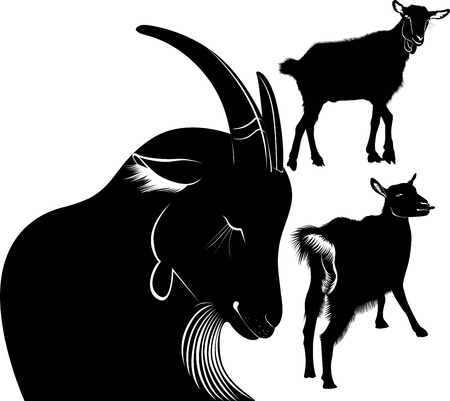 Goat animals  agriculture Vector