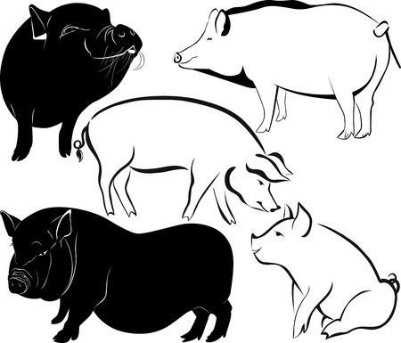 hoofed mammal: pig