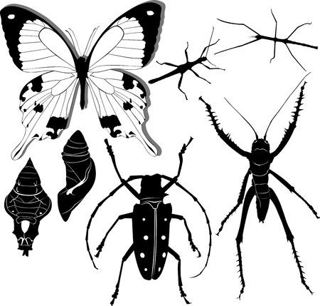 locust: insects Illustration