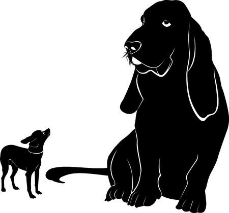 hounds: basset chihuahua dog