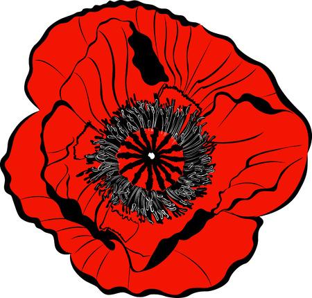 remembrance: poppy