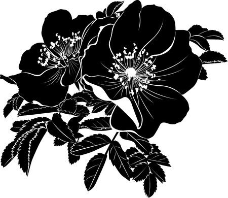 dogrose rose