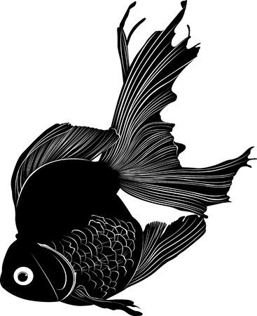 common carp: carp Illustration