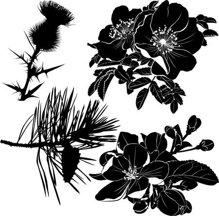 シスル dogrose バラ開花のりんごの木毛皮ツリー