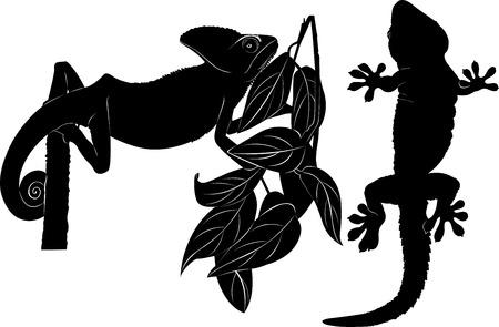 chameleon gecko Vector