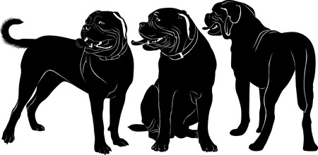 bordeaux: Dogue de Bordeaux dogs Illustration