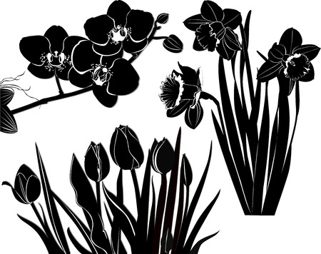 tulips daffodils orchid Vector