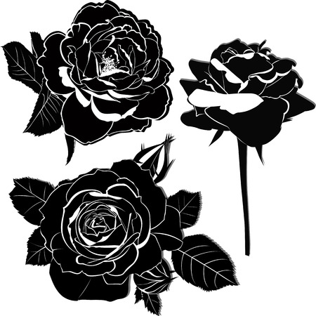 rose flowers Vector