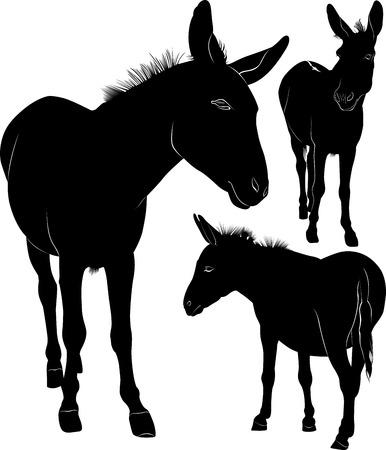 burro: silueta del burro Vectores