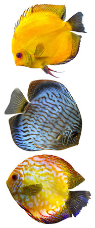 discus: Discus Stock Photo