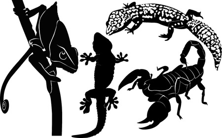 scorpion gecko chameleon Vector