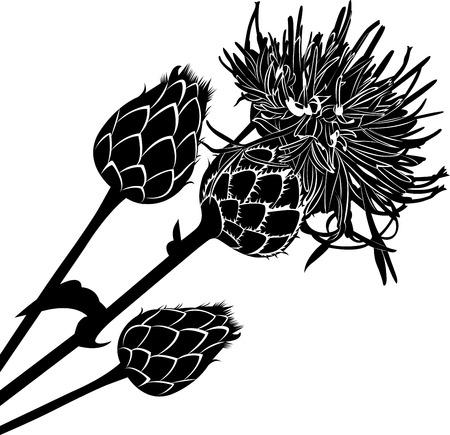 artichoke: thistle
