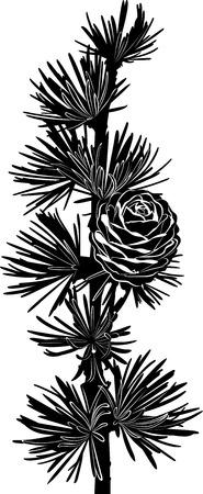 spruce: rama de abeto con conos Vectores