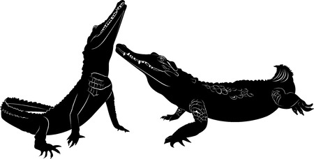 caiman: crocodile Illustration