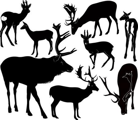 vertebrate: deer