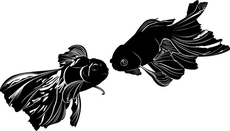 black fish: goldfish carp