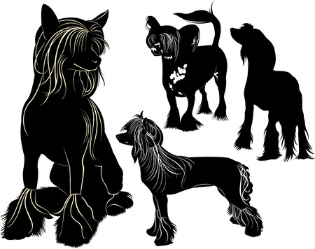 Chinese Crested Vector