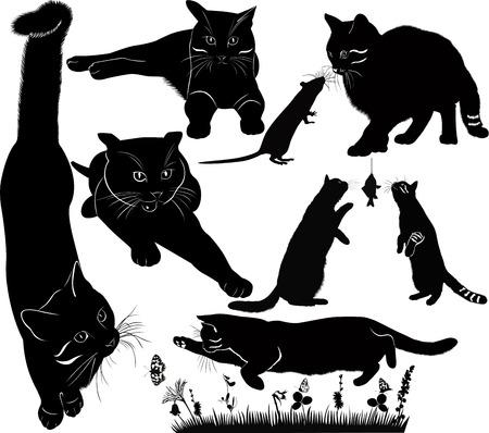 rata caricatura: gato