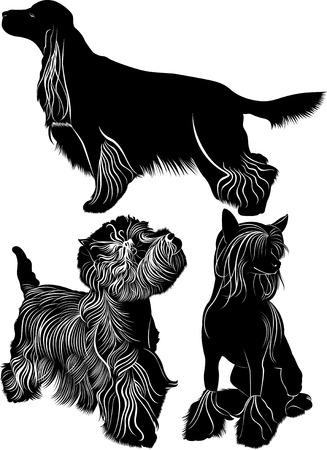 setter: dogs