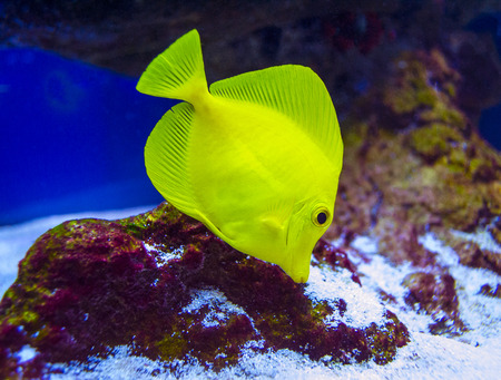 butterfly fish: butterfly fish Stock Photo
