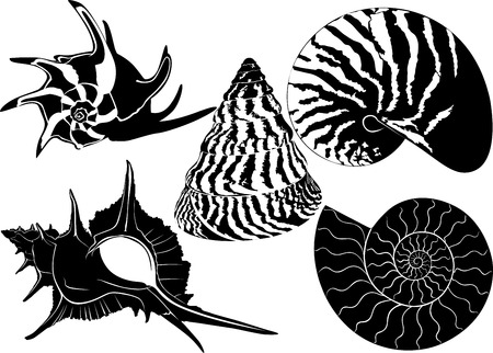 カタツムリの殻  イラスト・ベクター素材