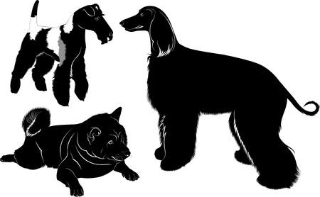 fox terrier: dogs