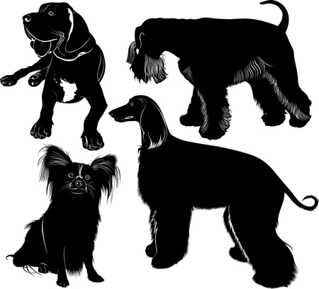 greyhound mastiff Miniature Schnauzer chihuahua Vector