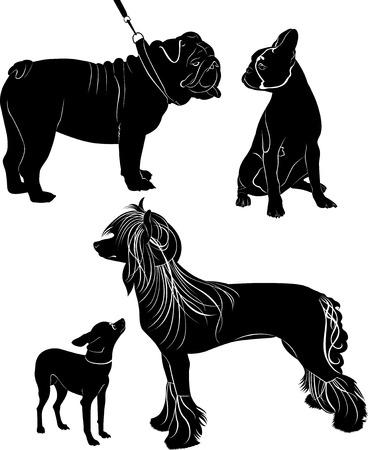 french bulldog: dogs