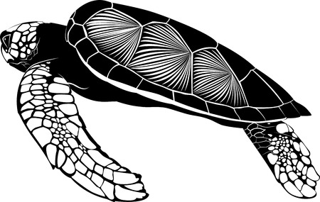 green sea turtle: tortoise