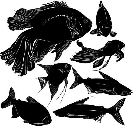 pterophyllum: fish