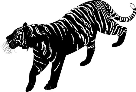 tigre blanc: Tigre Illustration