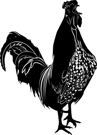 rooster: cock