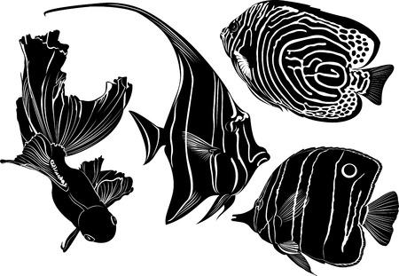 goldfish jump: marine aquarium fish Illustration