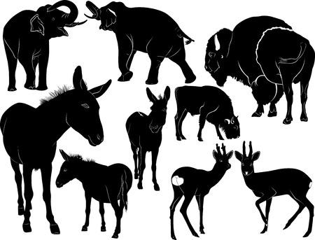burro: Colección de siluetas de animales mamíferos Vectores
