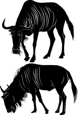wildebeest: wildebeest