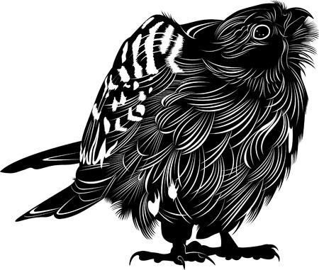 osprey: falcon Illustration