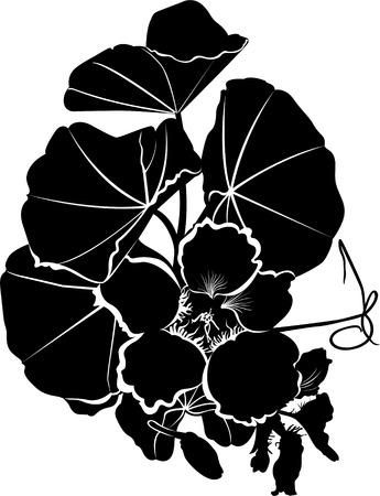 nasturtium: nasturtium flower