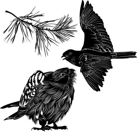 chickadee: birds Illustration