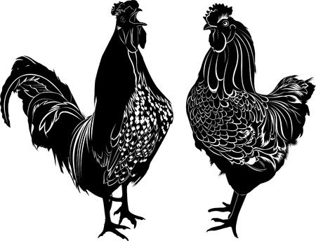 chick cartoon: roosters