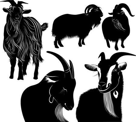 queso cabra: cabras Vectores