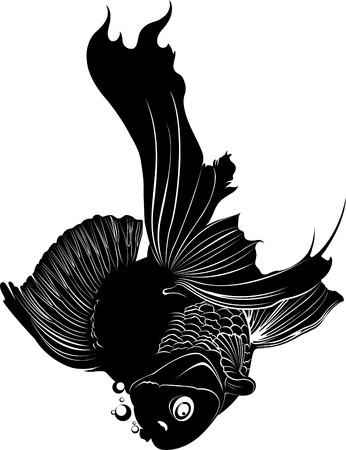 swimming carp: goldfish carp