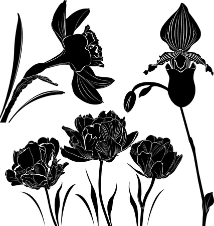 inflorescence: flowers collection Illustration