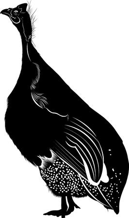 guinea: guinea fowl