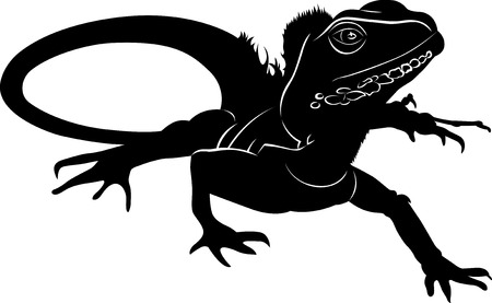 iguana: iguana Illustration