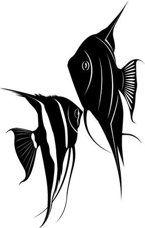 pterophyllum scalare: pterophyllum Illustration