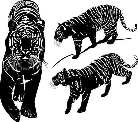 black and white: tiger black and white illustration