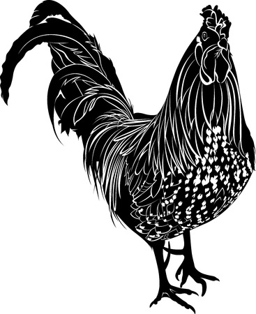 Cock. Poultry rooster. Farmer bird cock. Bird cock. Rooster black silhouette isolated on white background.