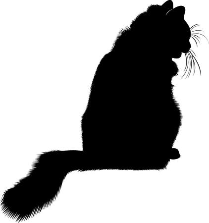 silueta de gato negro: Silueta del gato negro. gato. animales gato. animales silueta del gato negro aislado en el fondo blanco