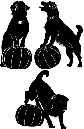 training dogs. Dog and ball. dogs vector drawing isolated on white background